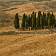 Royalty-Free Stock Photo: The cypress. Crete Senesi, Val d\'Orcia, Chianti, Tuscany, Italy