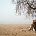 Tree on a shore — Stock Photo #8330424