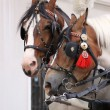 Stock Photo: Horses in Cracow
