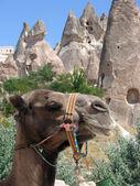 Kapadokya — Stockfoto