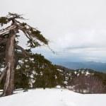 Winter Landscape — Stock Photo #10071540