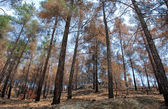 Remains of a forest fire — Stock Photo