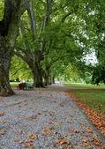 Park during Autumn — Stock Photo