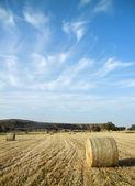 Wheat field landscape — Stock Photo