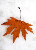 Autumn leaf on snow — Stock Photo