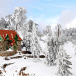 Winter Landscape, Troodos CYprus — Stock Photo