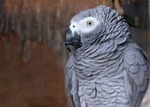Portrait of a Parrot in a cage — Stock Photo