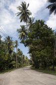 Carretera a través de la plantación de cocoteros, grifo sakae, Tailandia — Foto de Stock