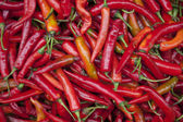 Hot Red Chillies — Stock Photo