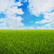 Grass Meadow with Clouds on sky — Stock Photo