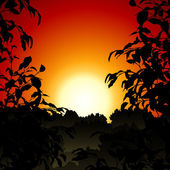 Sunset in Jungle — Vector de stock