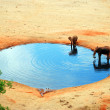 An elephant in the water hole — Stock Photo #8285997