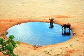 An elephant in the water hole — Stock Photo