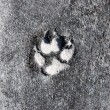 Stock Photo: Dog Footprint