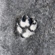 Dog Footprint — Stock Photo
