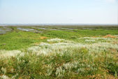 Salt meadow — Stock Photo