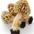 Morel,morille - Stock Photo