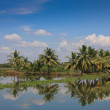 Kerala backwaters with coconut palm trees blue sky reflection — Stock Photo #8298240
