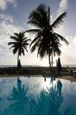 Palmy v bazénu — Stock fotografie