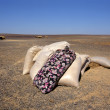 Jute sacks with food in the desert — Stock Photo