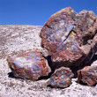 Stock Photo: Petrified Wood Fossil