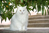 White cat with different coloured eyes — Stock Photo