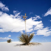 White Sands National Monument, New Mexico, USA — Stock Photo