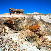 Petrified Wood Fossils — Stock Photo