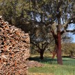 Cork trees in southern Europe — Stock Photo #8429725