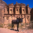 Donkey at the Monastery, Petra — Stock Photo