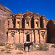 Donkey at the Monastery, Petra — Stock Photo #8430323