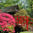 Japanese garden — Stock Photo #8442129
