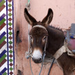 Stock Photo: Marrakesh Morocco, urbdonkey