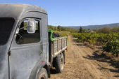 Old French truck with grapes — Stock Photo
