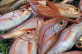 Fishes at a market place — Stock Photo