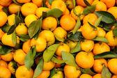 Bright Tangerines — Stock Photo
