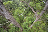 Forest seen from above — Stock Photo
