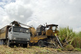 Sugar harvest at Cuba — Stock Photo