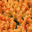 Several roses at a flower shop — Stock Photo #8545940