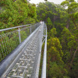 Stock Photo: Treetop walk path