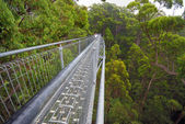 Treetop walk path — Stock Photo