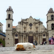 Dog and church in Cuba — Stock Photo