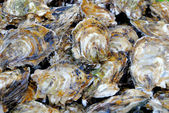 Oysters at a market — Stock Photo