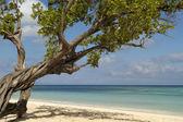Beach with green tree in Cuba — Stock Photo