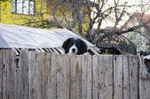 Pes na plot — Stock fotografie