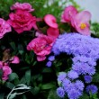 Pink and blue flowers — Stock Photo