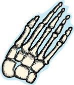 Huesos de la mano humana — Vector de stock
