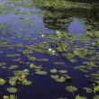 Lake with Lily Pads — Stock Photo #10171286
