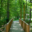 Foot Bridge Through Forest — Stock Photo #10171338