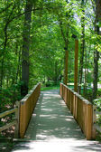 Foot Bridge Through Forest — Stock Photo